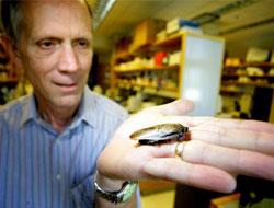 Российские экологи хотят поместить тараканов в Красную книгу