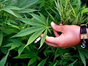 У жителя Луганской области изъяли 176 кг марихуаны и обрез
