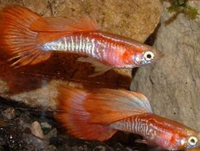Датскую журналистку обвинили в убийстве 12 аквариумных рыбок шампунем