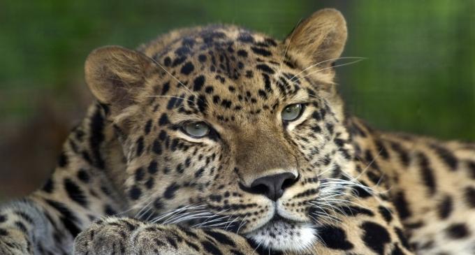 На грани вымирания: названы животные, которые могут исчезнуть с лица Земли (1)