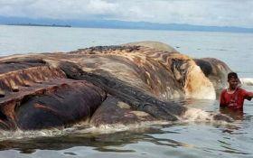 На узбережжя Індонезії викинуло тушу величезної невідомої істоти: опубліковані фото та відео