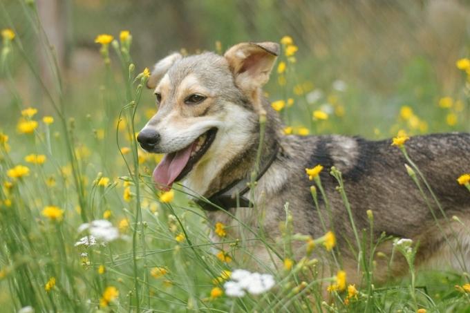 Найди друга: очаровательные собачки мечтают про уютный дом (2)