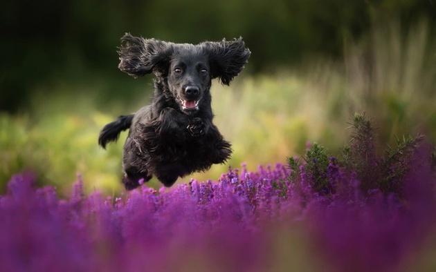 На престижному конкурсі обрали найкращі фото собак 2018 року: зворушливі кадри (11)
