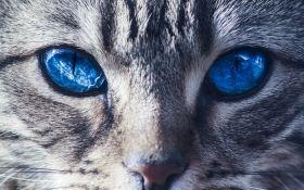 Святкуємо Всесвітній день кішок: топ-5 фільмів про наших пухнастих улюбленців