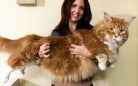 В Австралии нашли самого длинного в мире кота: опубликованы фото