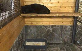 Сам виноват: в Подмосковье пантера насмерть загрызла украинца