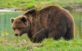 Колишні циркові ведмеді отримали нове життя у реабілітаційному центрі під Житомиром