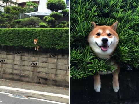 Наймиліші собачі фейли (17 фото) (4)