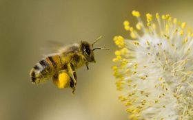 Спасение популяции: украинских пчел будут поставлять в Канаду
