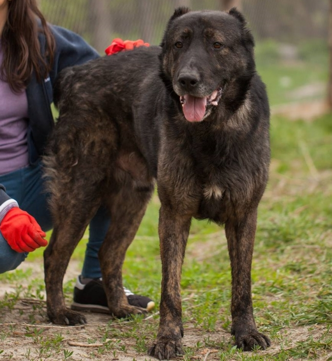 Найди друга: 8 замечательных собачек мечтают найти дом (1)