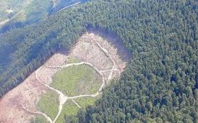 Луценко шокировал картиной вырубок в Карпатах: появились впечатляющие фото