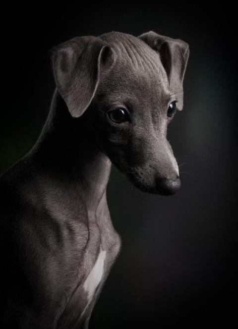 На престижному конкурсі обрали найкращі фото собак 2018 року: зворушливі кадри (2)