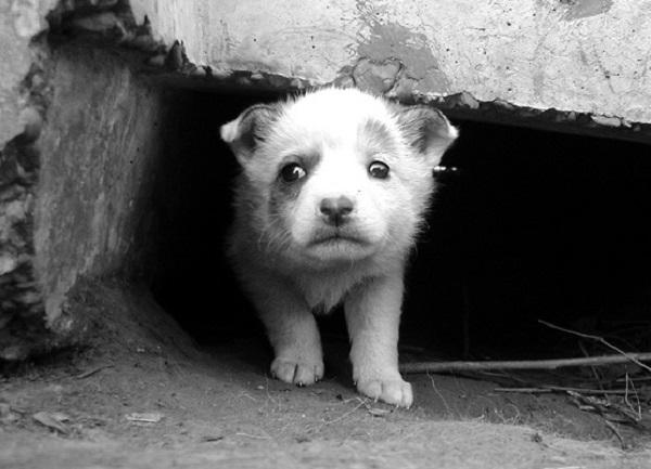 Приюти: 5 приютов, где можно взять животное домой (3)
