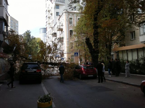 У центрі Києва величезне дерево звалилося на машини (4 фото) (4)