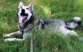 Знайди друга: надзвичайні собаки чекають на люблячих господарів