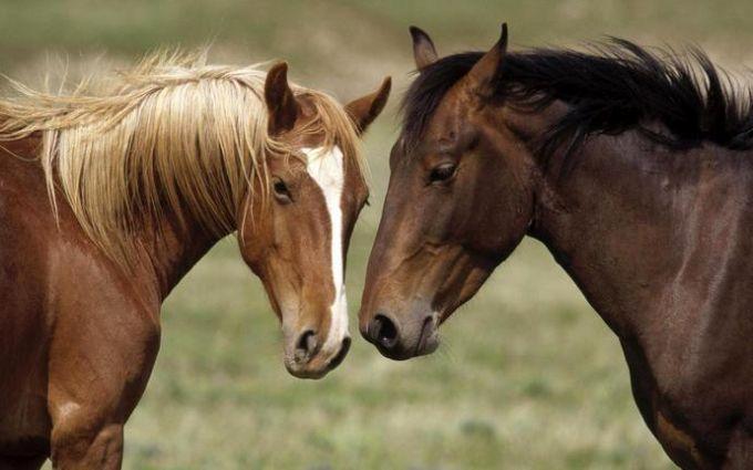 Історія з бойовим конем для бійця АТО отримала несподіване продовження