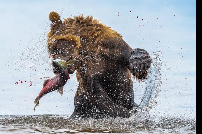Эти снимки захватывают дух - на престижном конкурсе выбрали лучшие фото дикой природы 2020 года (9)