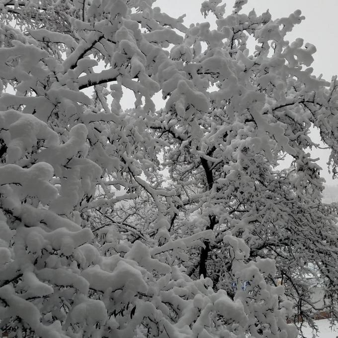 Дніпро засипало снігом: в мережі публікують фото справжньої зимової казки (1)