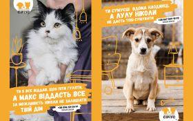 """Не сумуй наодинці: притулок для тварин """"Сіріус"""" та TABASCO закликають знайти новий дім для чотирилапих друзів"""