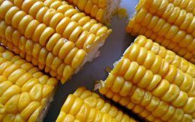 Как нужно варить кукурузу: полезные советы