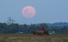 Схід рожевого Місяця: інтернет заполонили фото і відео незвичного явища