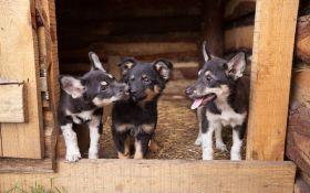 Як взяти собаку з притулку та зробити правильний вибір