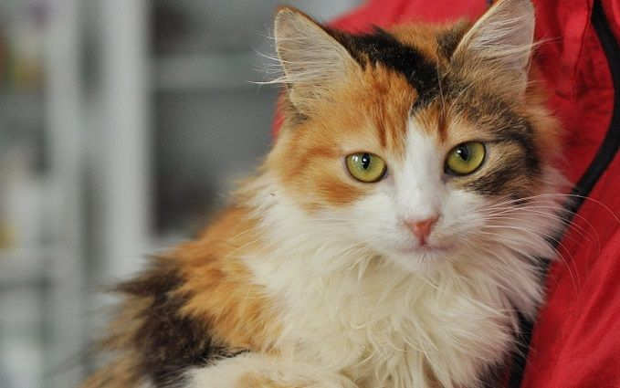 Найди друга: пушистые котики ждут любящих хозяев