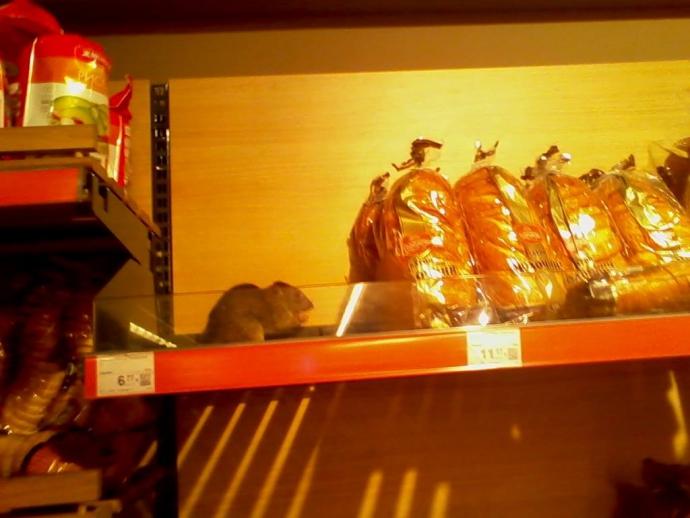 У Києві на полиці супермаркету засікли щура: опубліковано фото (1)