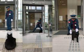 В Японии коты годами пытаются зайти в музей, но их не пускают - забавные фото