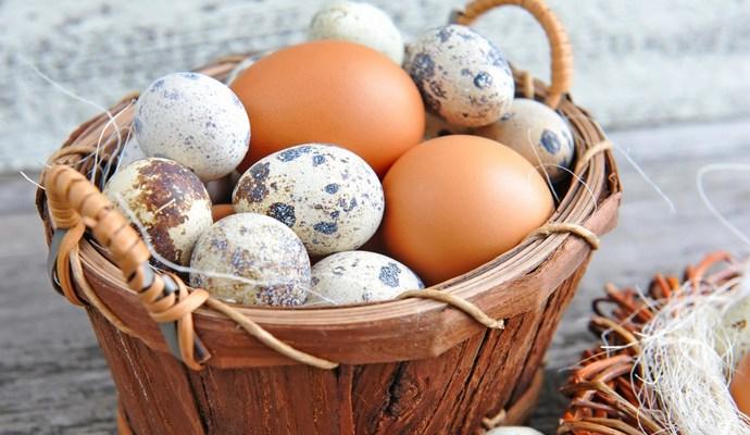 Мінагрополітики шукає причину сальмонели в яйцях для експорту до Ізраїлю