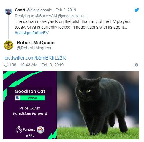 Чорний кіт перервав матч англійської Прем'єр-ліги і став зіркою мережі: відео курйозу (1)
