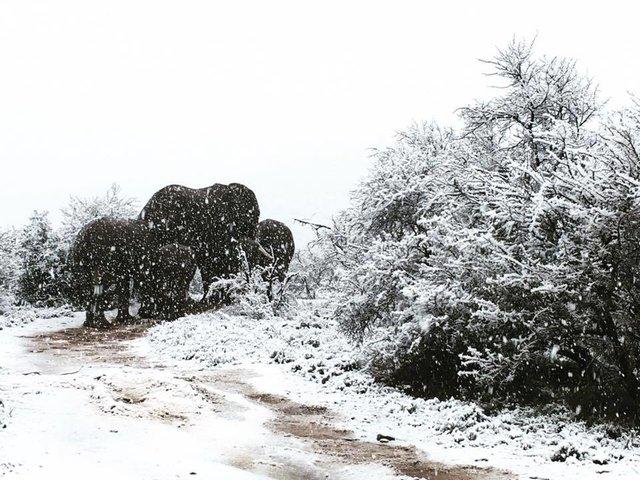 В Африке выпал снег - впечатляющие фото и видео (3)