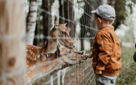 Финское чудо: как помочь детям полюбить школу