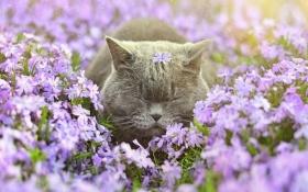 Тварини в очікуванні весни: опубліковані фото