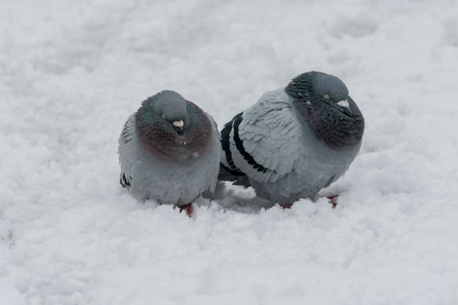 Погода на сьогодні: в Україні місцями очікується сніг, температура -3 до +6