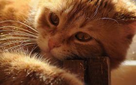 В Таїланді народилося дволике кошеня - вражаюче фото
