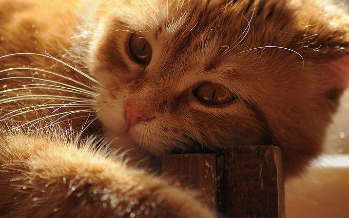В Таиланде родился двуликий котенок - впечатляющее фото