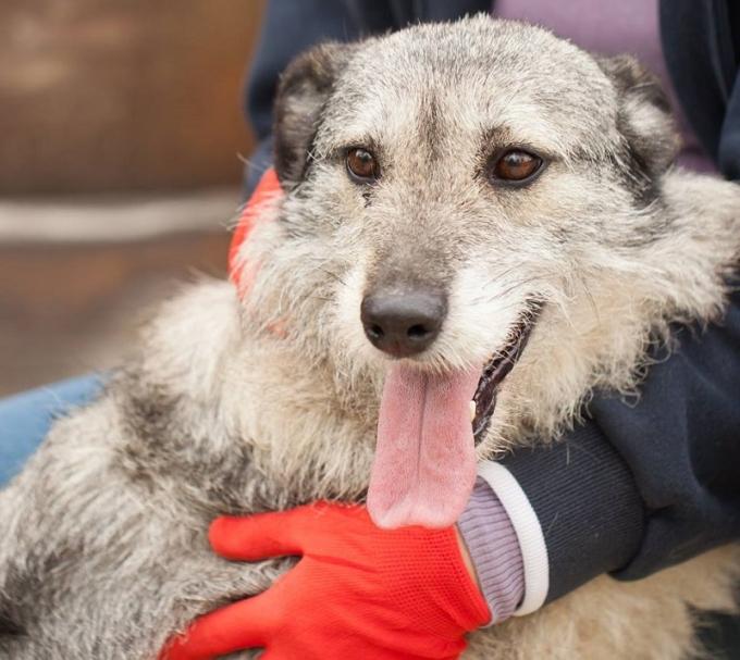 Найди друга: необыкновенные собаки ждут любящих хозяев (3)