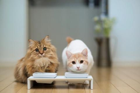 Котенок Ханна - подруга Дейзи (12 фото) (1)