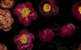 Три года работы и 8 ТБ данных: режиссер представил детальное видео процесса весеннего цветения