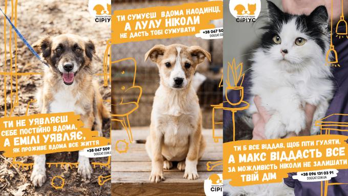 """Не грусти в одиночку: приют для животных """"Сириус"""" и TABASCO призывают найти новый дом для четвероногих друзей (2)"""