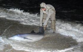 """На Херсонщине два часа спасали """"заблудившегося"""" дельфина: опубликованы фото"""