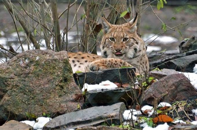 В Киевский зоопарк пришла настоящая зима: опубликованы интересные фото животных (1)