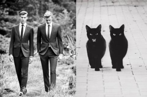 Коты как мужчины (21 фото) (9)