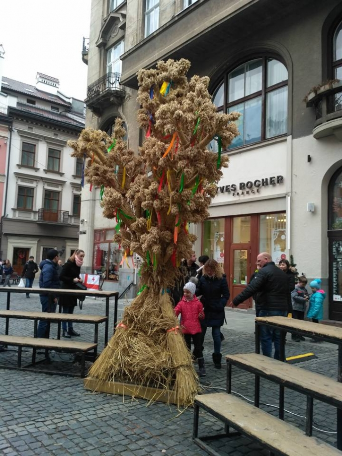 У Львові встановили гігантський різдвяний Дідух: опубліковані яскраві фото (1)