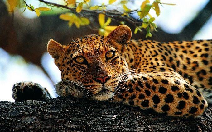 Це білка: мережу розбурхала новина про леопарда, який втік в Маріуполі