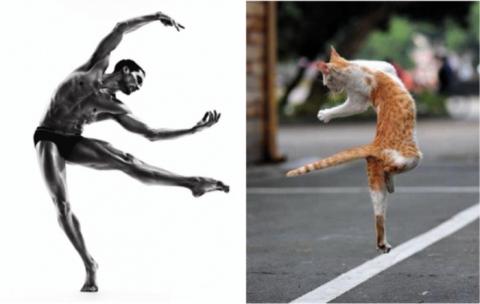 Коты как мужчины (21 фото) (16)