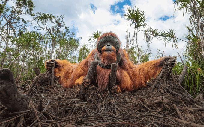 Ці знімки захоплюють дух - на престижному конкурсі обрали найкращі фото дикої природи 2020 року
