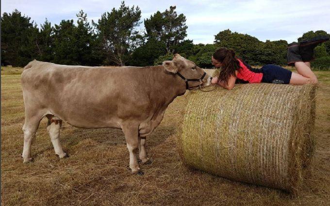 фото девушек с коровой в соцсетях