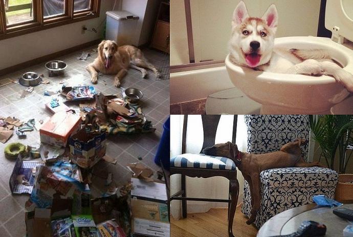 Як розважаються пси, коли господарів немає вдома (10 фото)